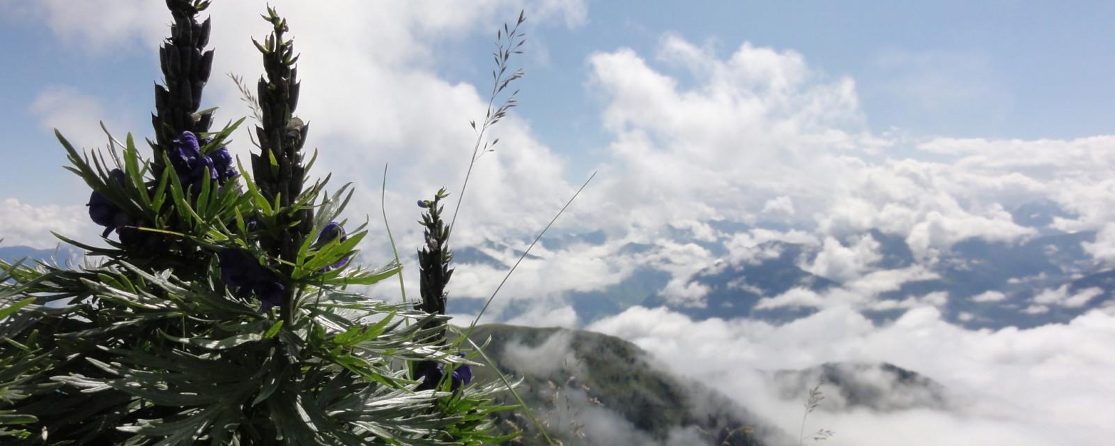 Arnoweg: Über den Wolken am Hundstein