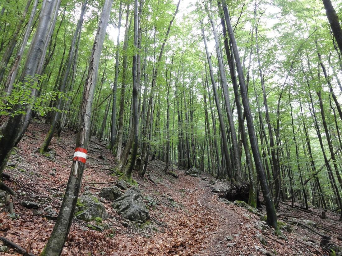 Arnoweg: Aufstieg zu den Jochalmen