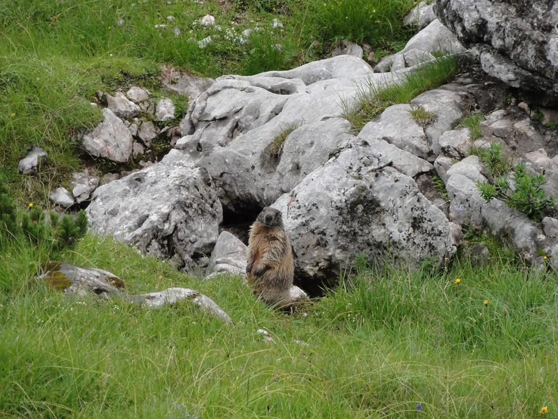 Arnoweg: Auch den Murmeltieren am Steinernen Meer ist das Wetter egal