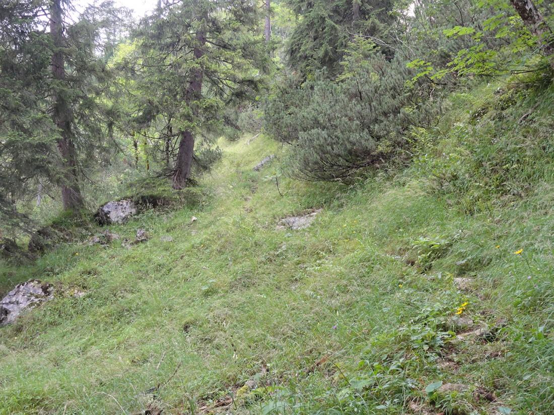 Arnoweg: Der teils stark verwachsene Weg Richtung Hundsalm