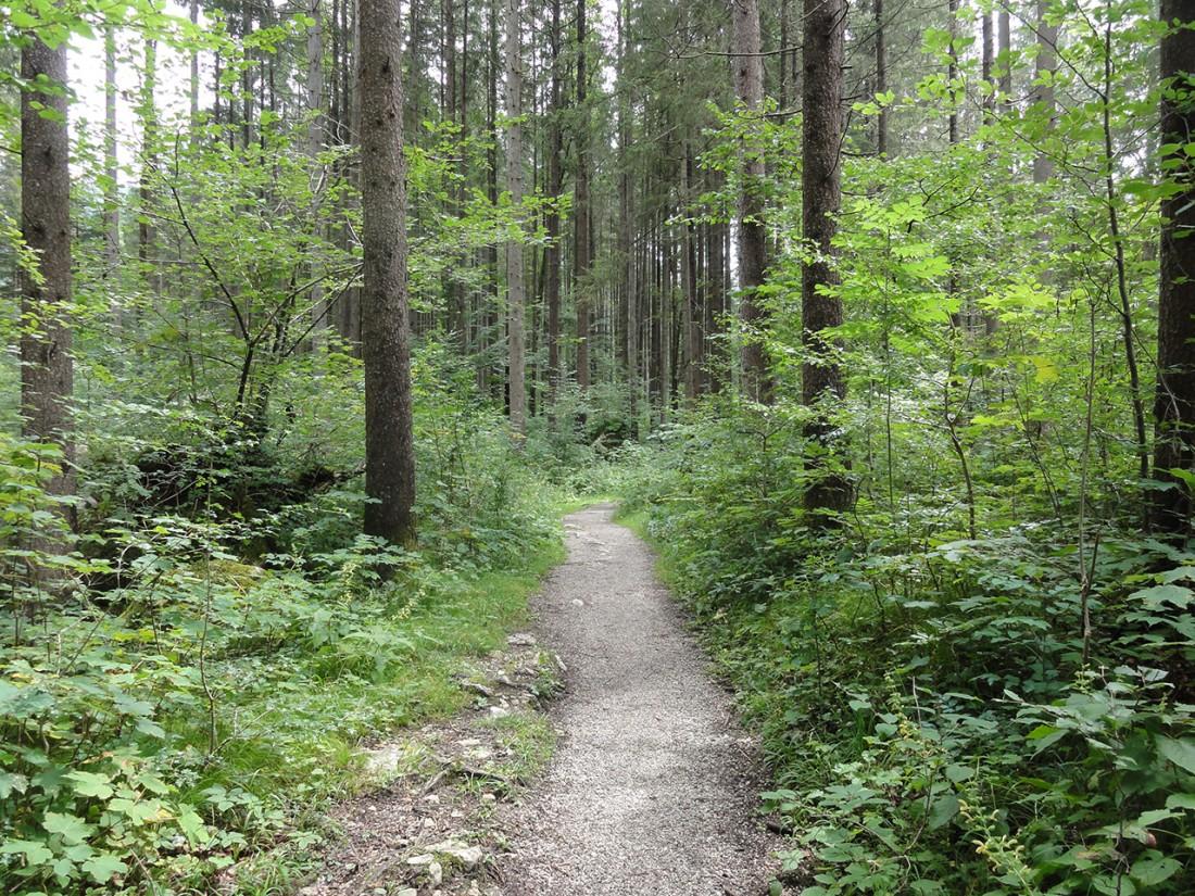 Arnoweg: Der Waldweg Richtung Lofer