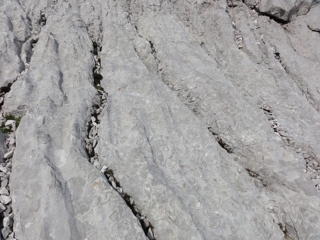 Arnoweg: Fossilien im Kalkstein