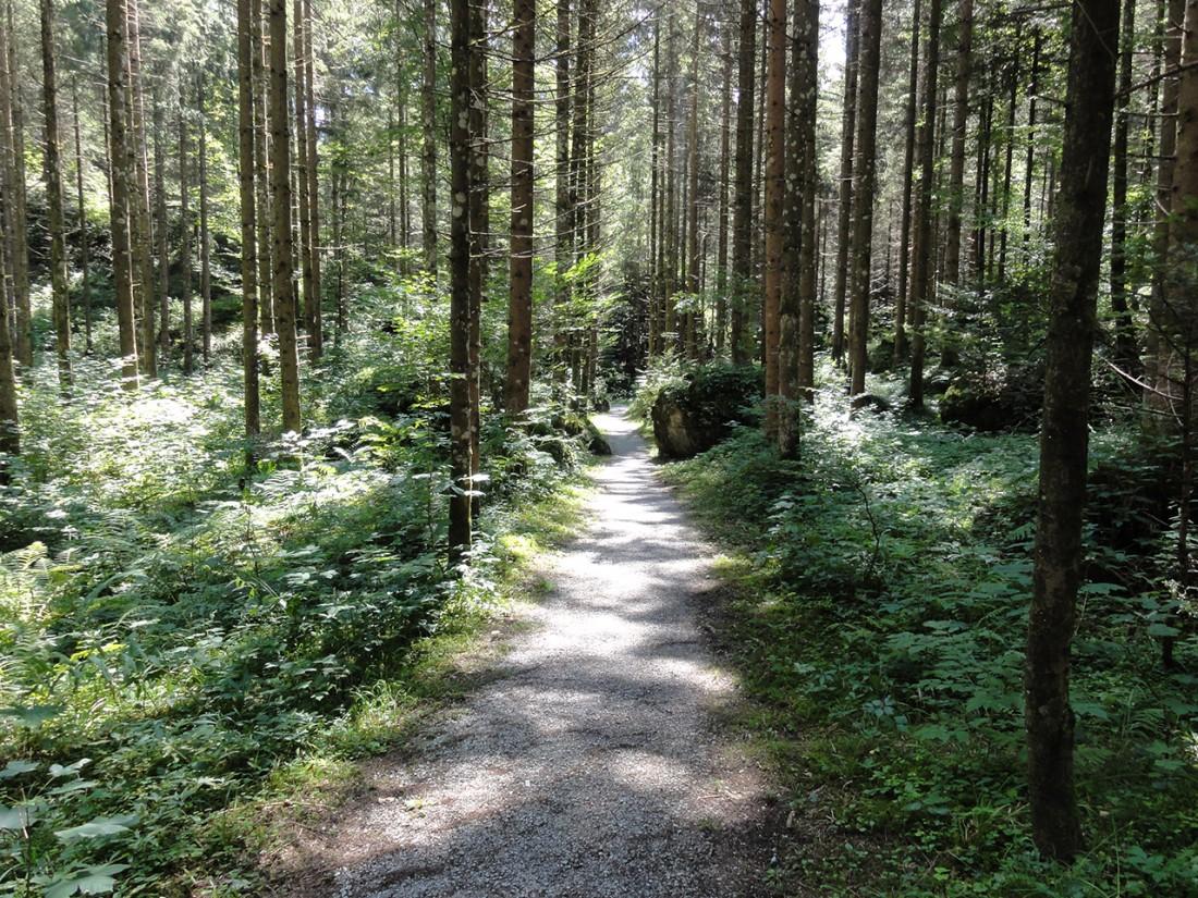 Arnoweg: Waldweg nach Weißbach