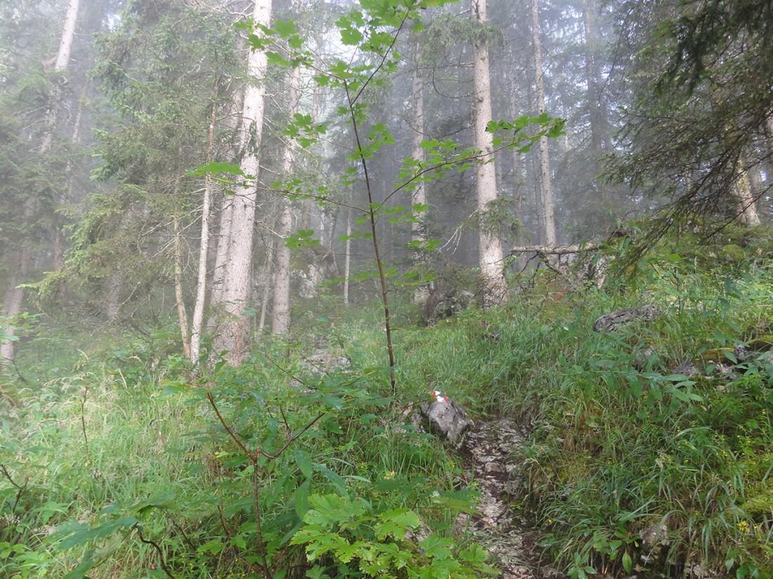 Arnoweg: Leichter Nebel am Aufstieg Richtung Passauer Hütte