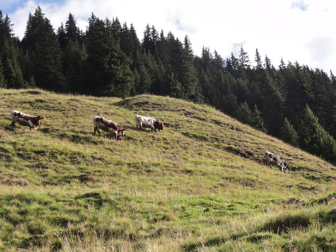 Arnoweg: Entlang des Abstiegs nach Mittersill geht es über schöne Almböden.