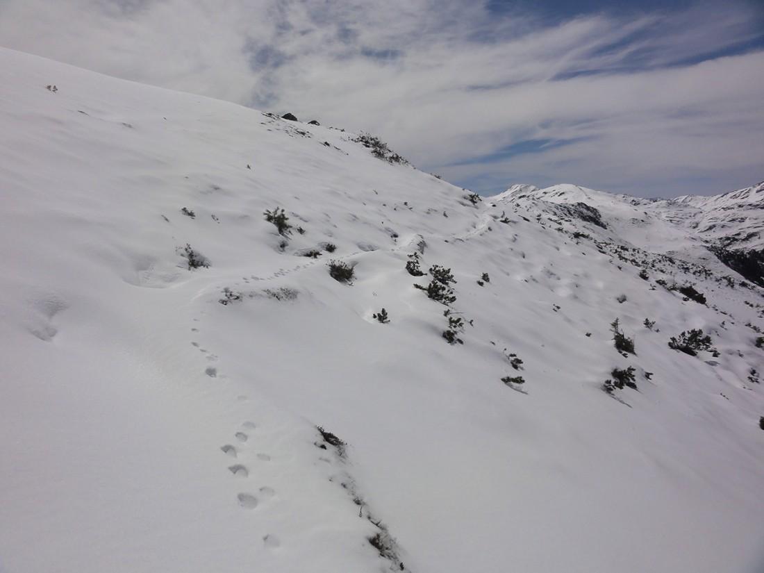 Arnoweg: Wildtierspuren im Schnee zeigen den Weg.