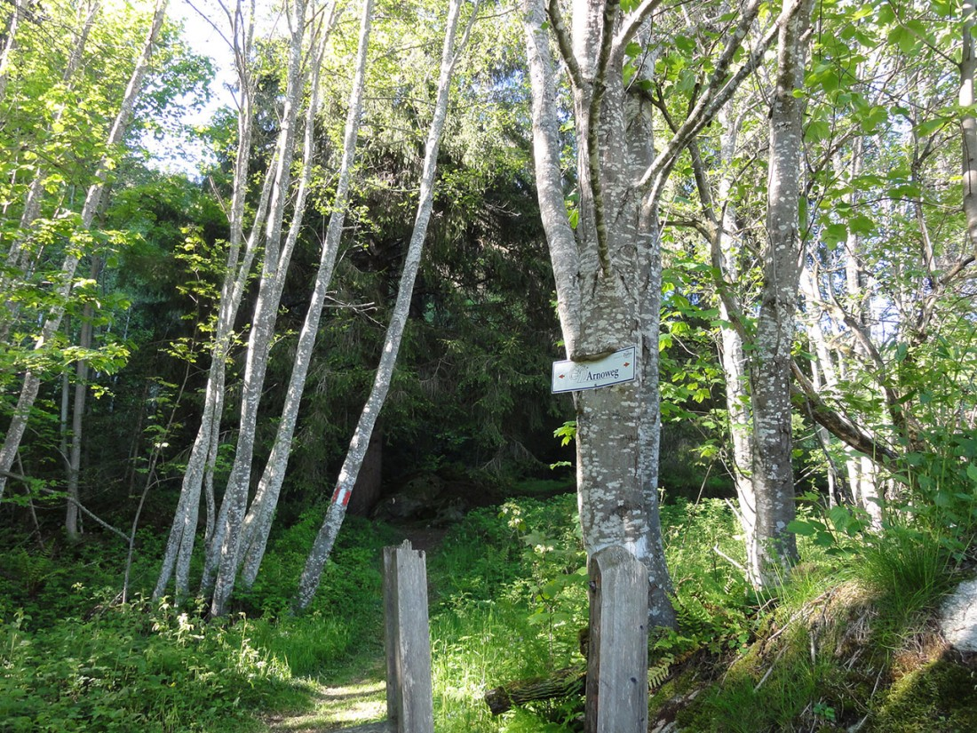 Arnoweg: Entlang des Walder Höhenwegs