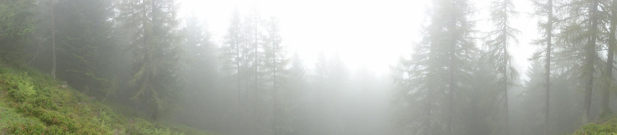 Arnoweg: Während dem Aufstieg von Maria Alm auf den Hundstein war es zunächst stark nebelig.