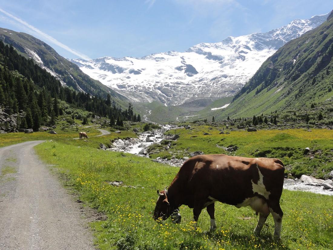 Arnoweg: Der Krimmler Gletscher strahlt schon von Weitem.