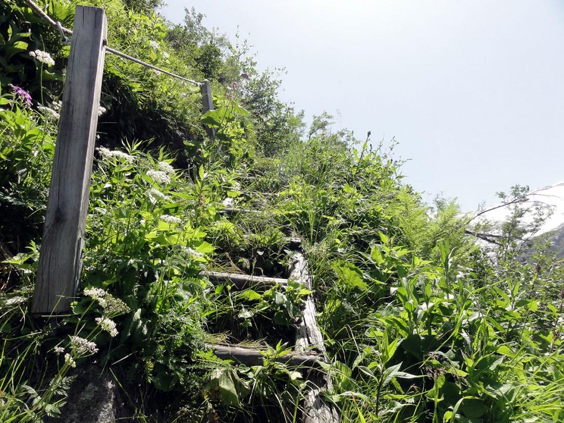 Arnoweg: Der Noitroi-Steig ist stellenweise verwachsen.