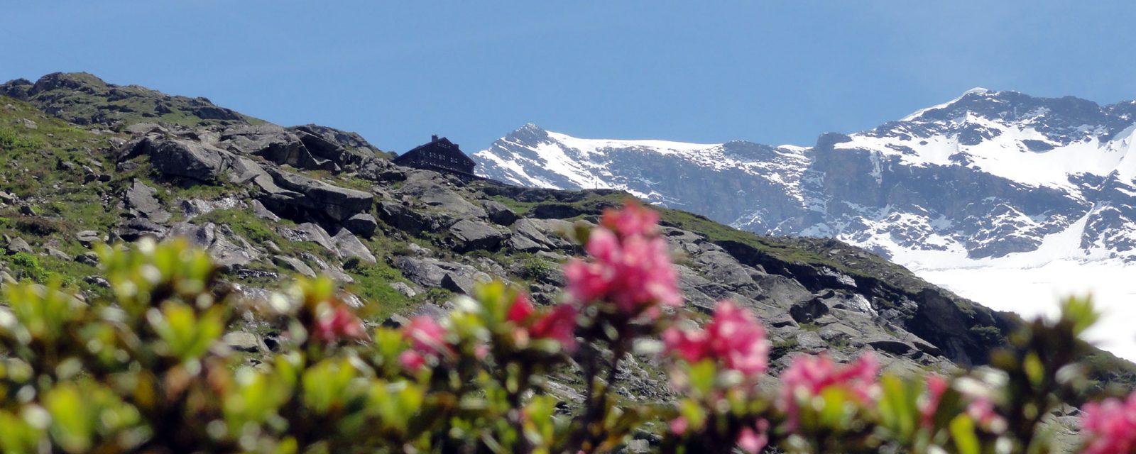 Arnoweg: Die Warnsdorfer Hütte neben dem Krimmler Kees