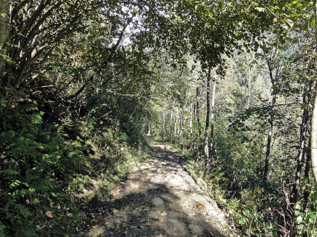 Arnoweg: Das letzte waldige Wegstück nach Fusch an der Glocknerstraße