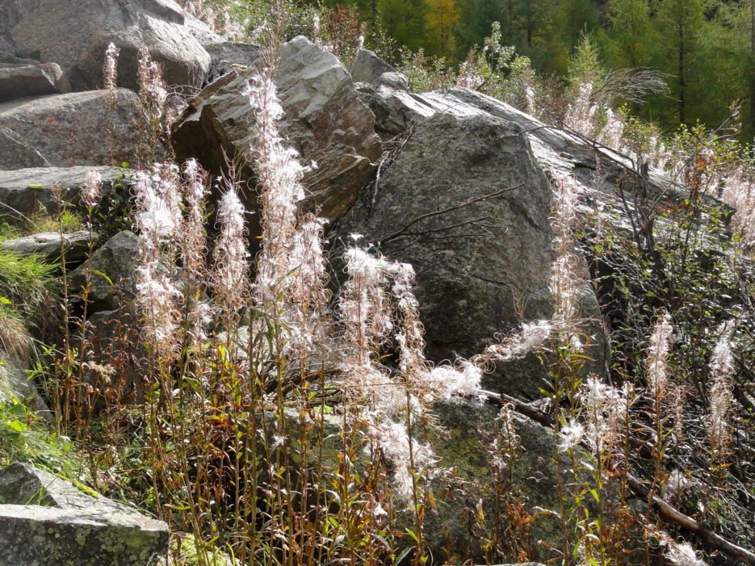 Arnoweg: Prachtvolles Herbstspiel entlang des Aufstiegs