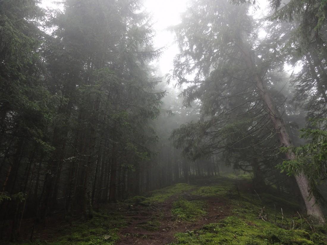 Arnoweg: Der Aufstieg zu den Steinernen Mandln am Höhenkamm war leider durchwegs nebelig.