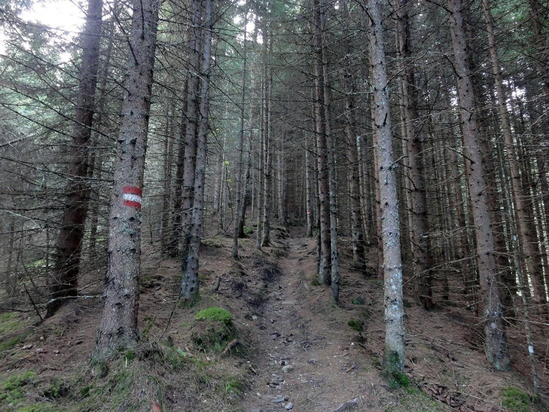 Arnoweg: Der Imbachsteig führt durch einen schattigen Graben Richtung Süden.