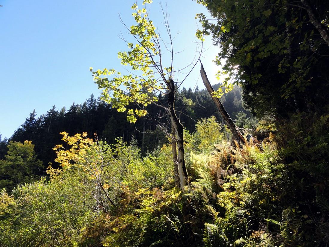 Arnoweg: Die Herbststimmung wird mit sinkender Sonne immer schöner.