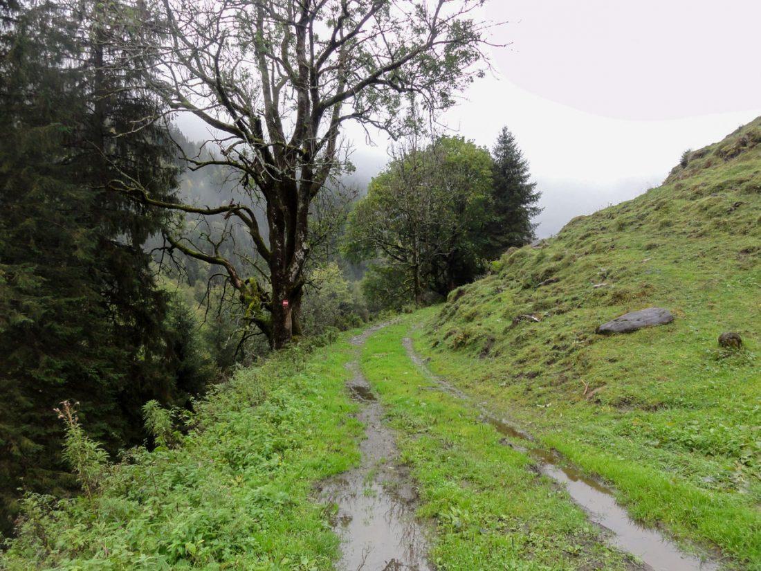 Arnoweg: Verregnetes Wetter am Weg nach Ferleiten und ins Käfertal